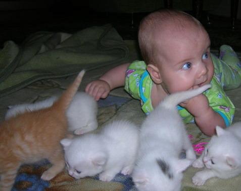 Животное в доме: учимся толерантности. Безопасность жизнедеятельности ребенка