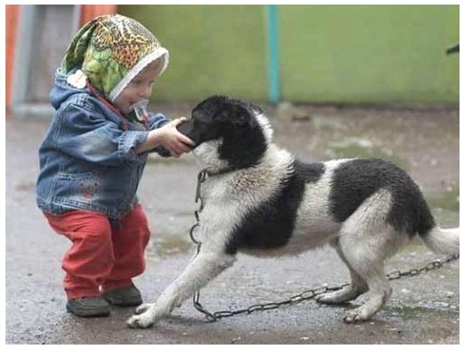 С какими опасностями может столкнуться малыш на прогулке, как их избежать, как противостоять бродячей собаке и как вести себя, если угрожает опасност