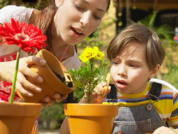 Какие комнатные растения безопасно иметь в квартире, где есть ребенок. И как, посредством комнатных растений, приобщить ребенка к общения с природой